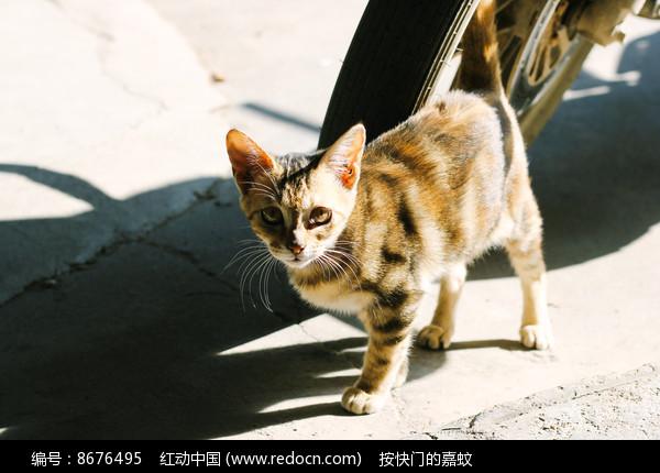 阳光下的猫图片