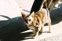 阳光下的猫