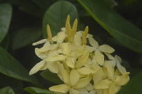 黄色花卉素材