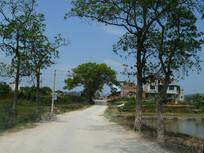 黎平县口团村的公路
