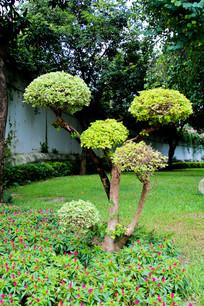 矮树盘景造型