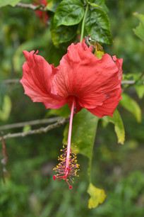 大红花高清摄影图
