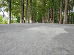 敌角度拍摄树林路