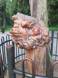 独具艺术气息的老树瘤