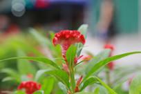 鲜艳的小红花