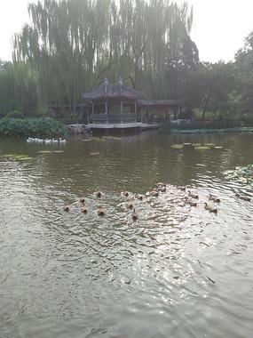夏日的园林湖边一景