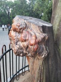 艺术气息的树瘤