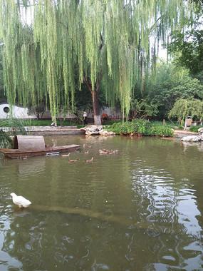 园林的湖边一景
