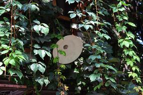爬满绿色植物的古墙壁上的电灯