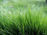 微距拍摄的绿草