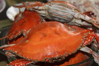 煮熟的大闸蟹