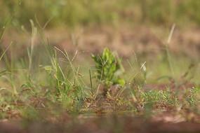长在地上的小草