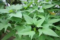 绿色植物叶子生长特写照片