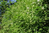 野外山坡上不知名的小花