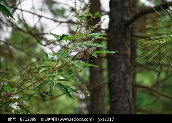 树林中的蝴蝶图片