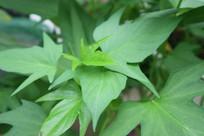 绿色植物叶子嫩芽照片