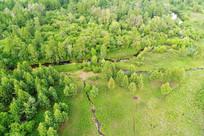树林草甸小溪风景