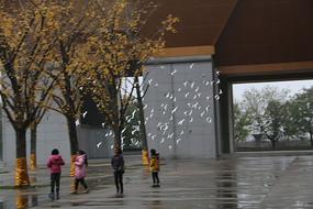 西安法门寺广场鸽子起飞特写