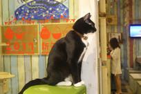 安静的小黑猫