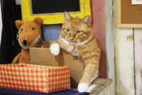 霸气的小橘猫