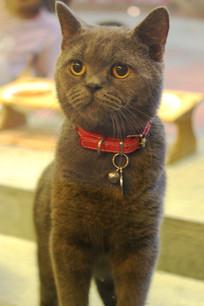 玻璃屋里的小蓝猫
