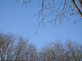蓝色的天空与树