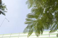 绿色枝叶 天空
