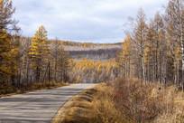 内蒙古秋色森林林间公路