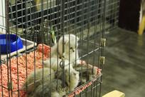 铁笼里的小猫群