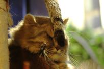 无奈的小灰猫