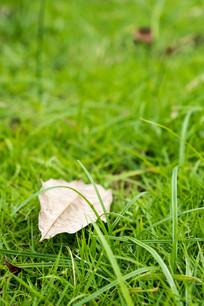 草丛的落叶