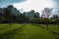 红楼滩公园绿化景色