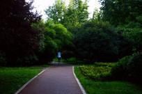 绿道上跑步的人