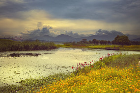 下渚湖湿地公园