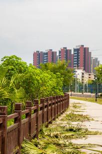 惠州鹿江公园的小路