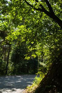 小路上的绿色
