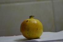 橙色的石榴