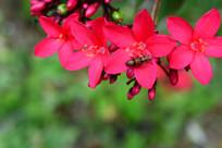 红色小花上的昆虫