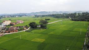 绿油油的田野风景
