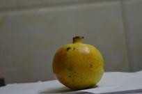 水果-石榴