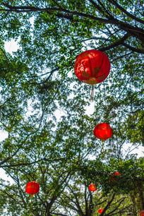 仰视惠州西湖树木和灯笼