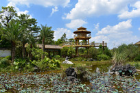 五象湖公园荷园园林景观
