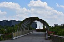 五象湖公园小桥上的植被
