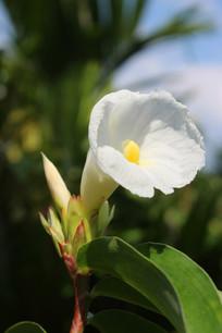 开放的白色野生花卉