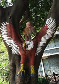 树上的山猴