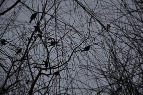 树枝上的鸟儿