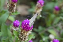 小花朵和小蝴蝶