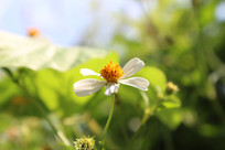 阳光下的白色花朵