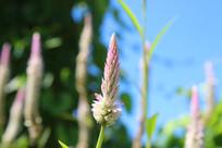阳光下的粉色野花