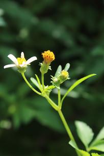 阳光下的花骨朵